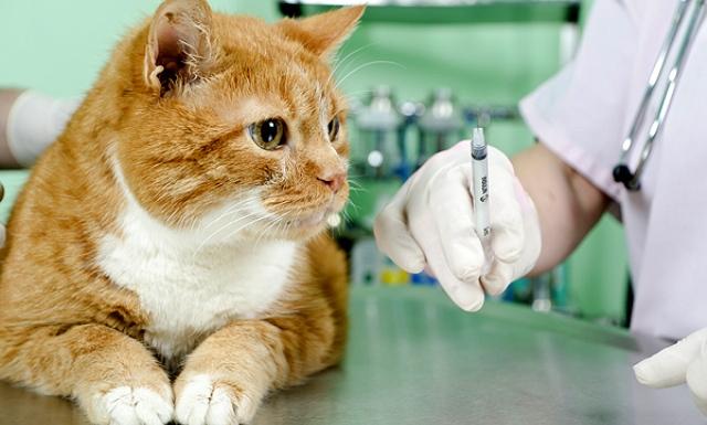 1f710608b19c Τι εμβόλια πρέπει να κάνετε στη γάτα σας  - Ecozen