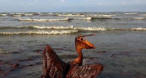 04 oil spill pelican.w710.h473