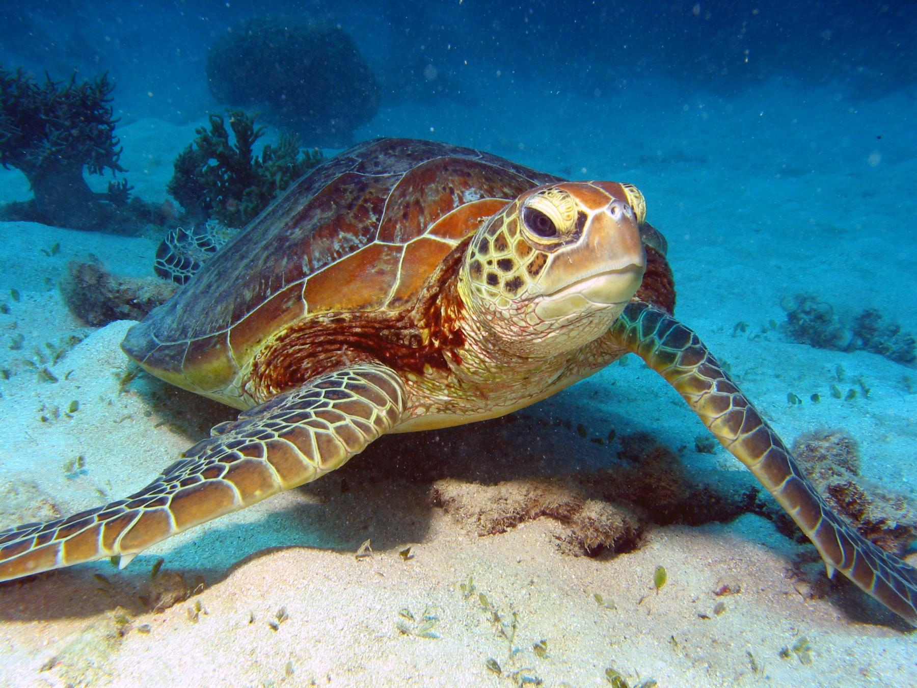 turtles (3)