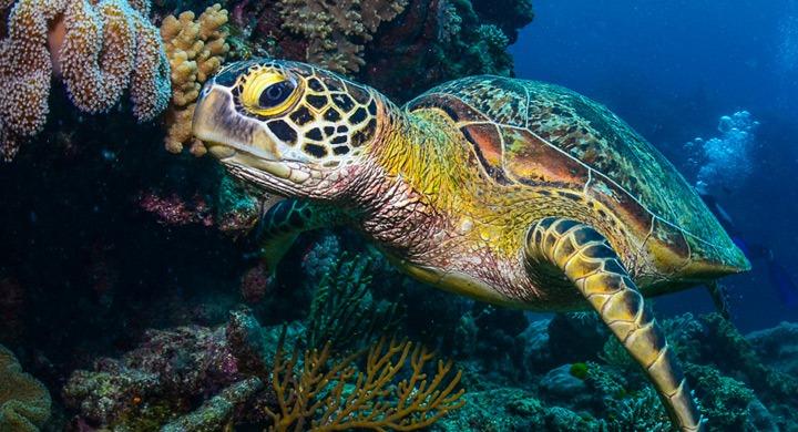 turtles (5)