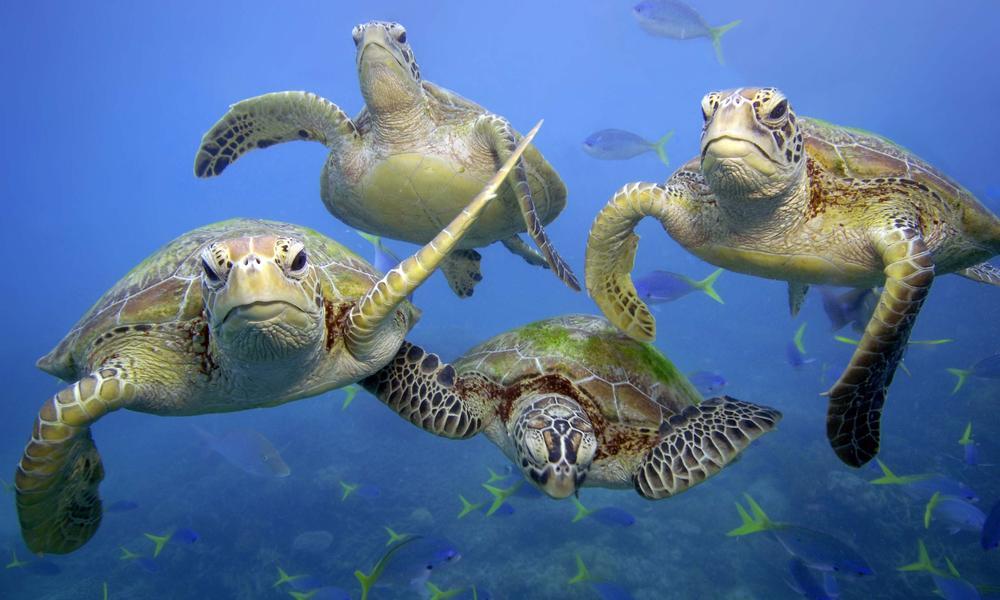 turtles (7)