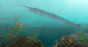 ψαρι (1)