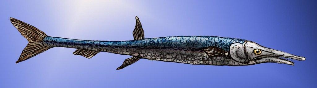 ψαρι (2)