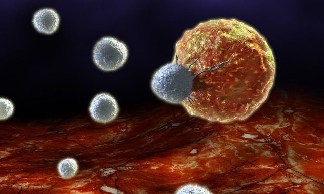 cells (4)