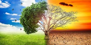 global warming climate change tree 1big stock2sdfdsf