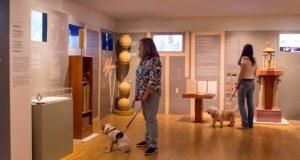 3. 'Ενα pet friendly Μουσείο στην Αθήνα