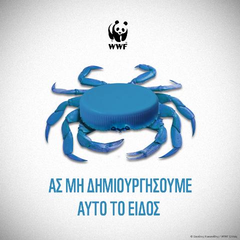 crab lid