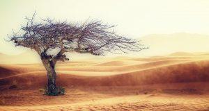 Ερημοποίηση