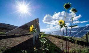 solar with flower 800x400