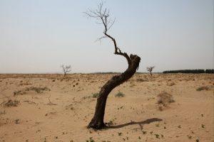 watts desert