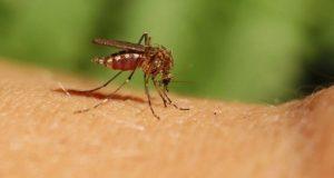 ιό του Δυτικού Νείλου