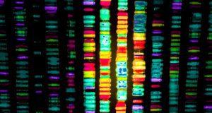 ανθρώπινο γονιδίωμα