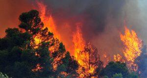 καμένες δασικές εκτάσεις