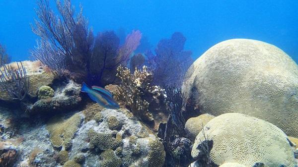 Κοραλλιογενής
