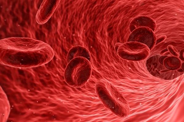 blood 1813410 960 720