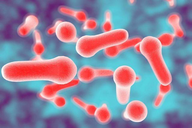 Clostridium bacteria