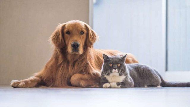 home animals