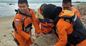 θαλάσσιες χελώνες