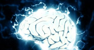 brain 1845962 960 720
