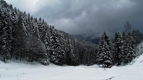 snow dasos