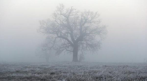frost & fog