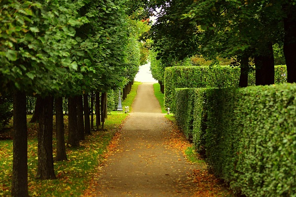 hedges 1