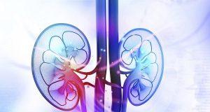 kidney tissue