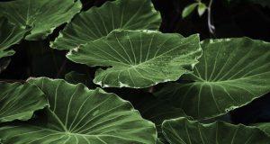leaf 318743 960 720
