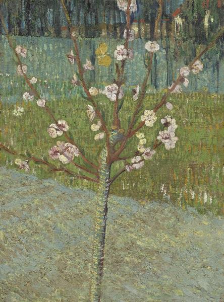 Vincent Van Gogh Peace Tree Blosson, Van Gogh Museum