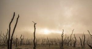 dead trees 947331 960 720
