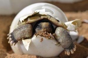 desert tortoise 987972 960 720