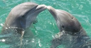 dolphin 1974975 960 720