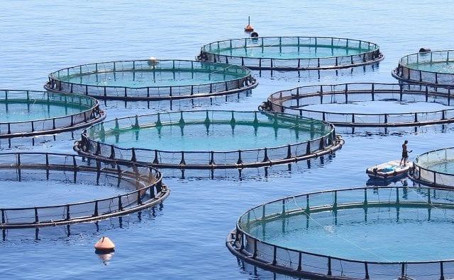 fish farm hero