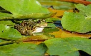 frog 2211972 960 720