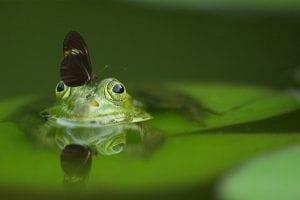 frog 540812 960 720
