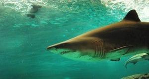 shark 506025 960 720