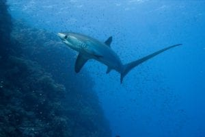 sharks 266014 960 720==