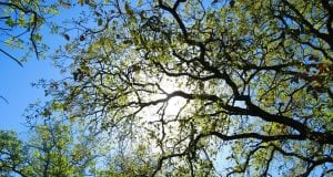 tree 2131098 960 720