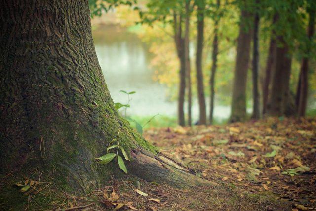 tree trunk 569275 960 720