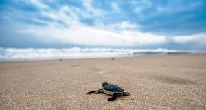 turtle 2201433 960 720