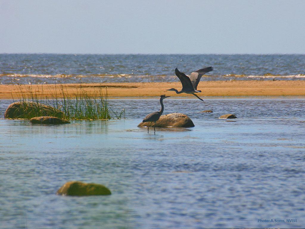 Παγκόσμια Ημέρα Περιβάλλοντος: Καμπανάκι για τη βιοποικιλότητα