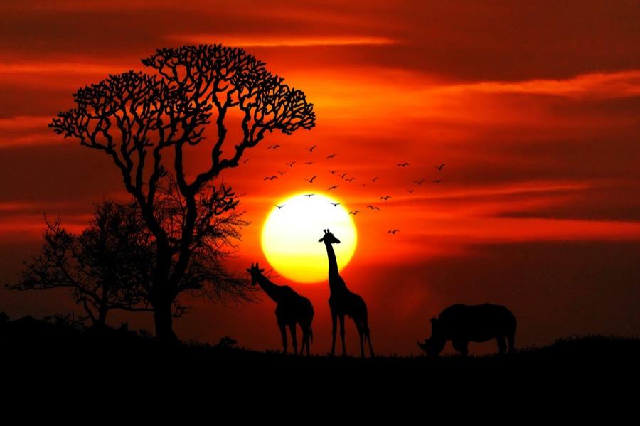 Ζώα Αφρικής