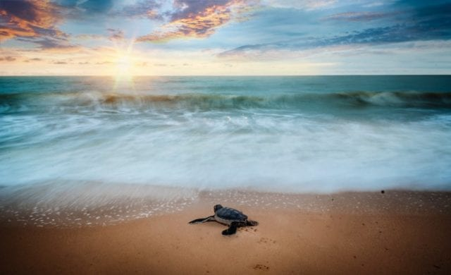 Θαλάσσια χελώνα