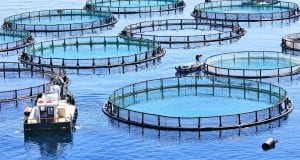 aquaculture aerial view 1600