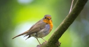 αποδημητικά πτηνά