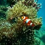 Θαλάσσιο πάρκο - ψάρι