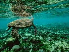 Θαλάσσιο πάρκο - χελώνα