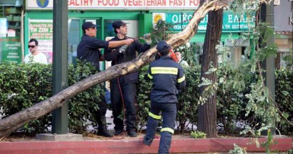 Δέντρα στην Αθήνα