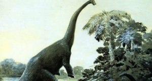 Diplodocus διπλόδοκος δεινόσαυρος