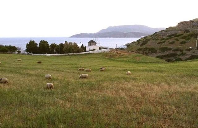 αγροί, χορτολιβαδικές εκτάσεις